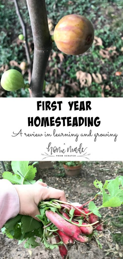 First year homesteading. A review of a wonderful learning and growing experience