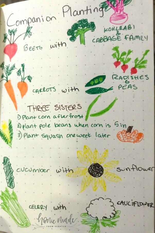Companion planting bullet journal page to help organize thoughts and inspire.