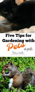 Gardening around pets and pests