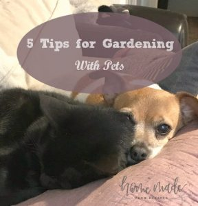 Gardening with pets