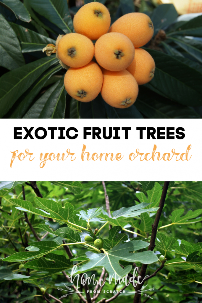 Alternative and exotic fruit trees to grow in your home orchard