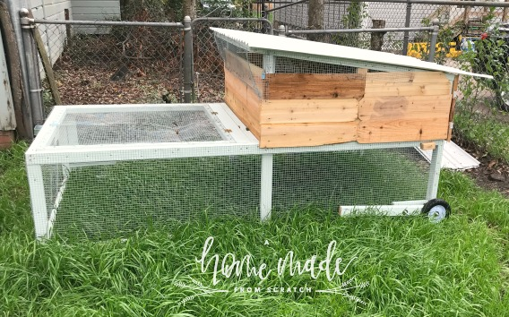 Ryegrass growing around newley finished mobile chicken coop.