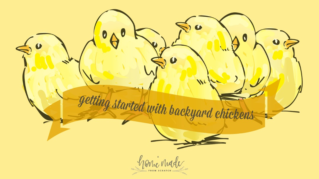 Get started with backyard chickens. Its easy and simple, just a few simple steps to chickens in an urban setting