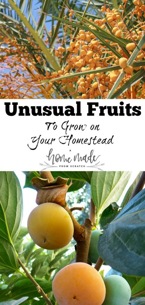 Growing fruits can be a great way to get food year after year on your homestead.