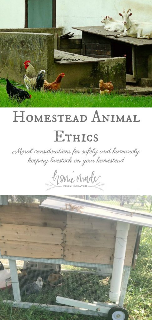 Ethical and moral considerations for keeping animals on your homestead and understanding the human-animal relationship.