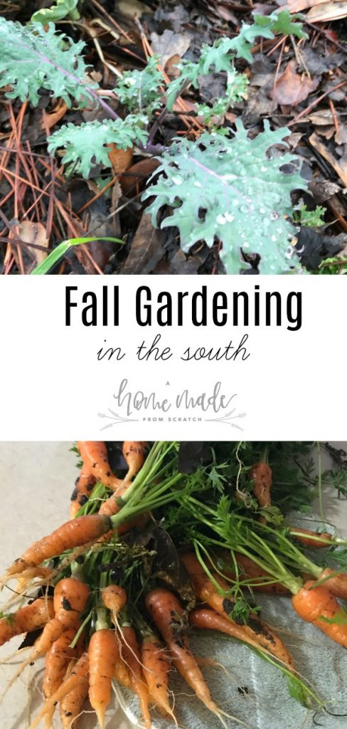 Learn some tips and tricks to gardening through the fall, in the south