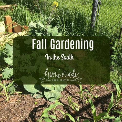 Fall gardening in the south