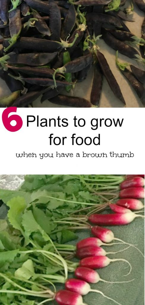 Six easy to grow plants for food, even if you have a brown thumb