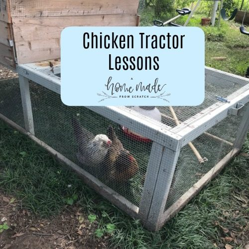 Chicken Tractor: Lessons Learned So Far