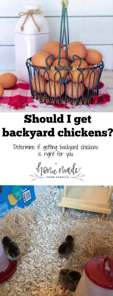 Answer some simple questions to see if getting backyard chickens is right for you