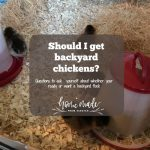 Do you want to get backyard chickens?