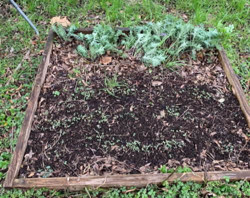 Easy to build square foot raised bed is made with only 4 pieces of wood.