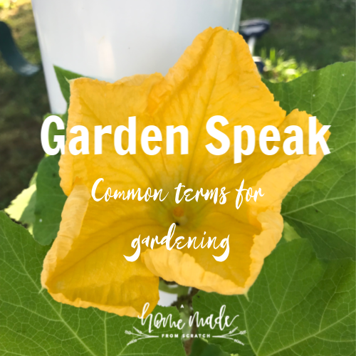Learn all the lingo in gardening to start your gardening journey today