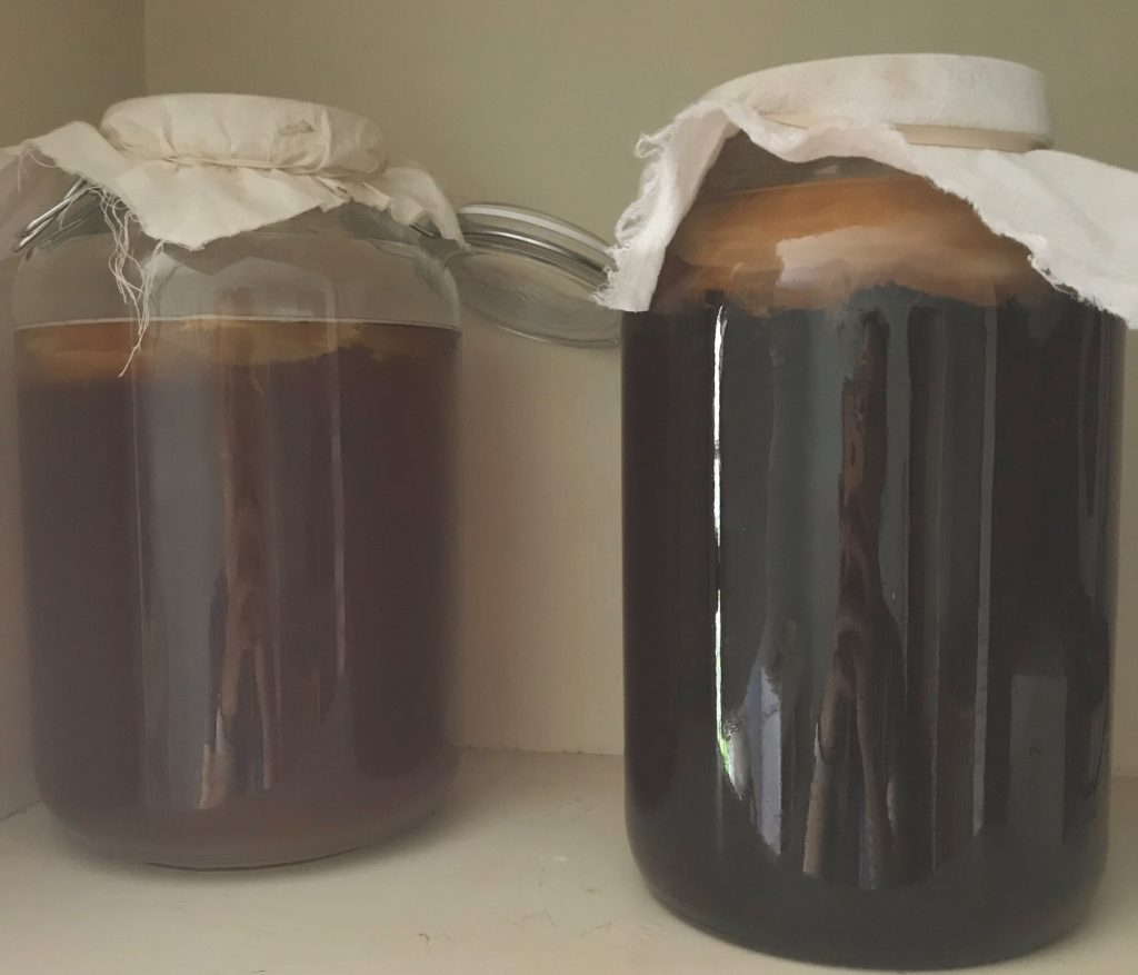 Double batches of kombucha. You can have fresh kombucha everyday.