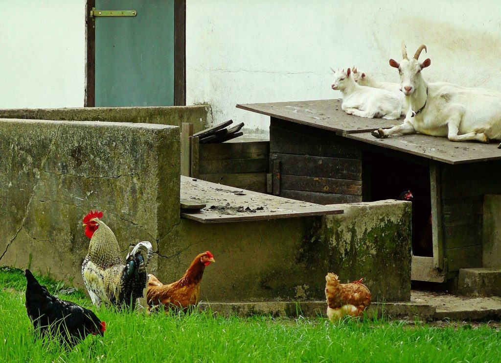 Learn more about becoming a homesteader.