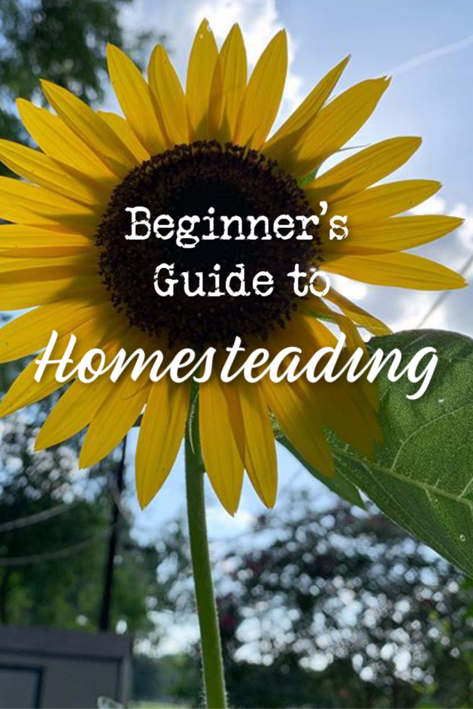 Beginner's guide to homesteading