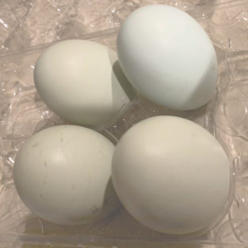 Backyard hens provide wonderful eggs that have many uses