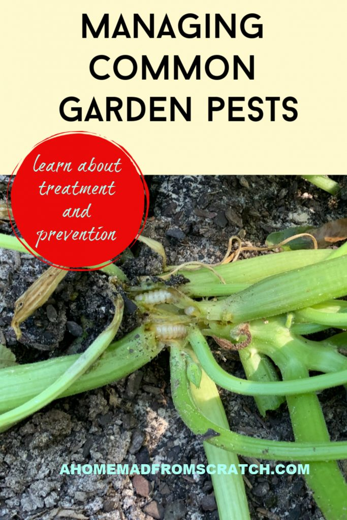 learn how to manage common insect pests in your garden