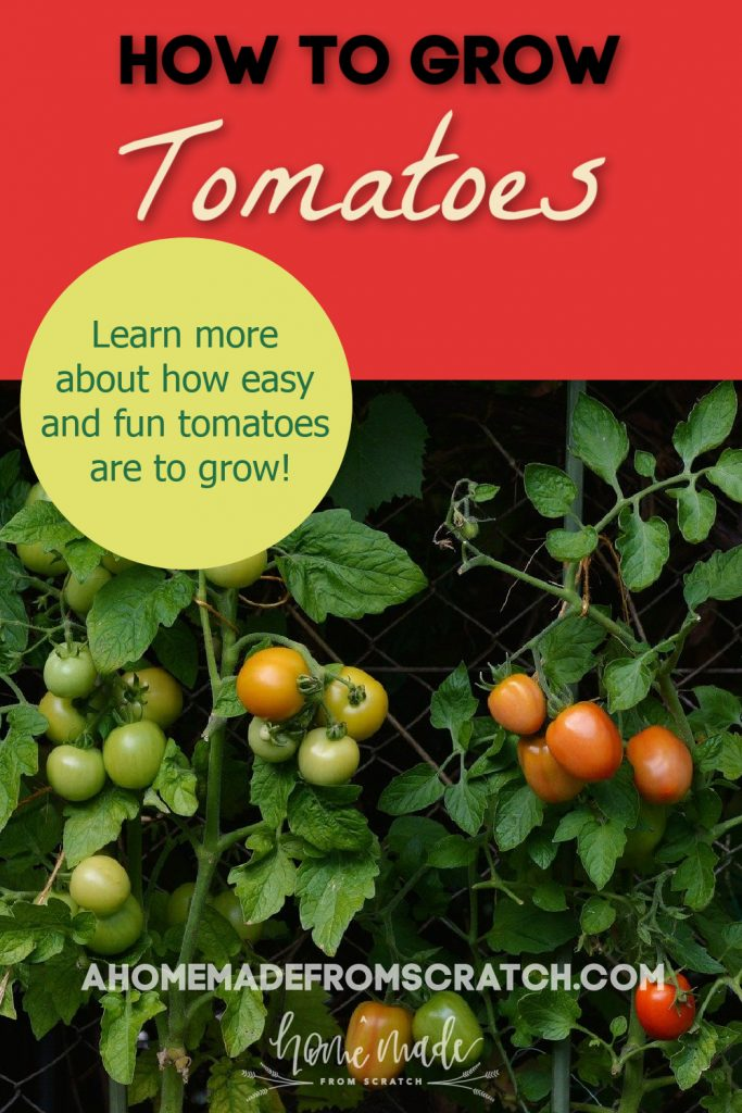 learn more about how to grow tomatoes in your garden