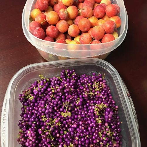 foraged plums and beauty berry