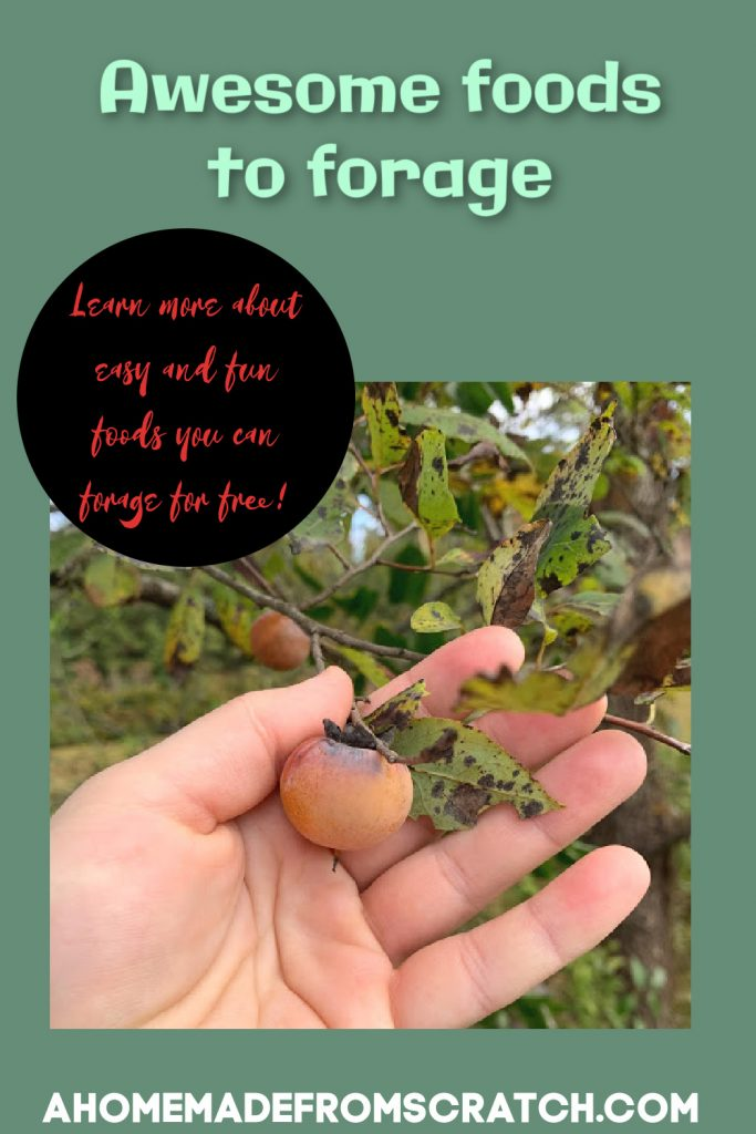 foraged foods are fun and easy to find, learn about more