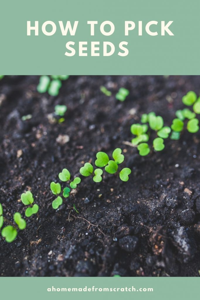 how to choose seeds