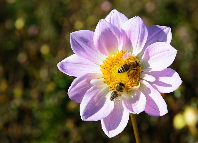 bees help pollinate all sorts of plants in the garden