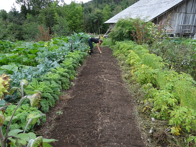 growing food in the fall is a great idea